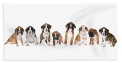 Litter Of Boxer Puppies Beach Sheet