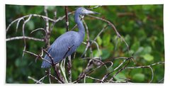 Little Blue At Trinidad's Caroni Swamp Beach Towel
