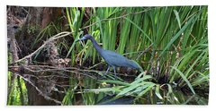Beach Towel featuring the photograph Little Blue Heron by Sandy Keeton