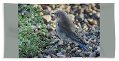 Little Fledgling Mountain Bluebird Beach Towel
