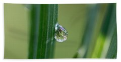 Beach Towel featuring the photograph Little Garden In The Droplet by Yumi Johnson