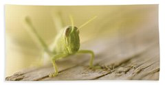 Little Grasshopper Beach Towel by Claudia Ellis