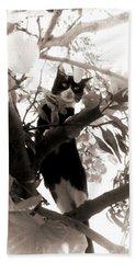 Little Kitty Beach Sheet