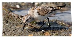 Beach Towel featuring the photograph Little Western Sandpiper by Sue Harper