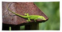 Lizard On Lantern Beach Towel by Stephanie Hayes