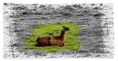 Llamas At Ingapirca Beach Towel