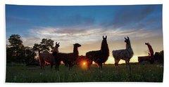 Llamas At Sunset Beach Towel
