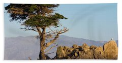 Lone Cypress Tree  Beach Sheet