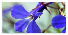 Lobelia Erinus Beach Sheet