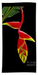 Lobster Claw Beach Towel by Rand Herron