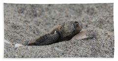 Baby Loggerhead Hatchling Beach Towel by John Black