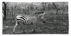 Lone Zebra Beach Sheet by Michael Cinnamond