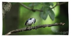 Lonely Nuthatch Beach Towel