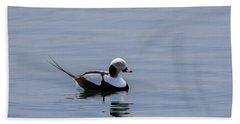 Long-tailed Duck 3 Beach Towel