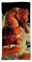 Longsnout Seahorse, St. Croix, U.s. Virgin Islands 2 Beach Sheet