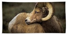 Looking Back - Bighorn Sheep Beach Towel