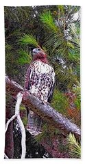 Looking For Prey - Red Tailed Hawk Beach Sheet by Glenn McCarthy Art and Photography