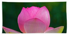 Beach Towel featuring the photograph Lotus Blossom 842010 by Byron Varvarigos