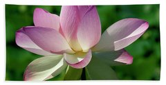 Lotus Bud--getting The Hang Of It Iv Dl0096 Beach Sheet