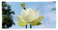 Lotus Debbie Gibson Flower Beach Sheet