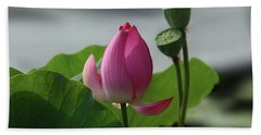 Lotus Flower In Pure Magenta Beach Towel by Yvonne Wright