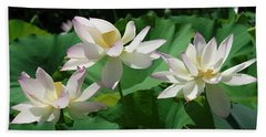Beach Towel featuring the photograph Lotus--sisters Iv Dl0085 by Gerry Gantt