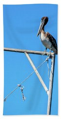 Louisiana's State Bird Beach Towel