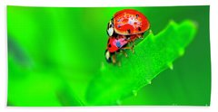 Beach Towel featuring the photograph Love Bugs by Sharon Talson