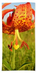 Lovely Orange Spotted Tiger Lily Beach Towel by Kent Lorentzen