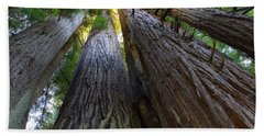 Low-angle View Of Redwood Trees Beach Towel