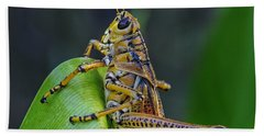 Lubber Grasshopper Beach Towel