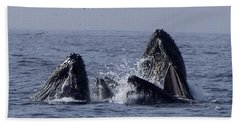 Lunge Feeding Humpback Whales Beach Towel
