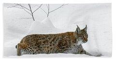 Lynx Hunting In The Snow Beach Towel