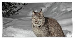 Lynx In Morning Light Beach Towel