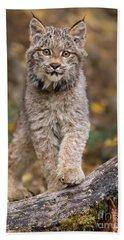 Lynx Kit Beach Towel