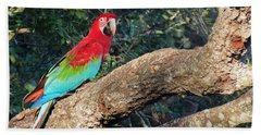 Macaw Resting Beach Towel