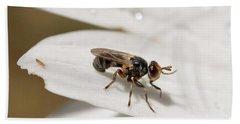 Macro Bugs Beach Sheet