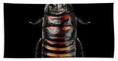 Beach Towel featuring the photograph Madagascar Hissing Cockroach by Sergey Taran