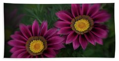 Beach Towel featuring the photograph Magenta African Daisies by David and Carol Kelly