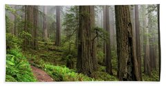Magical Forest Beach Sheet by Scott Warner