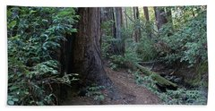 Magical Path Through The Redwoods On Mount Tamalpais Beach Sheet