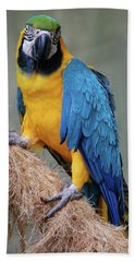 Magnificent Macaw Beach Towel by DigiArt Diaries by Vicky B Fuller