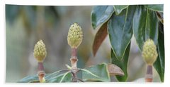Beach Sheet featuring the photograph Magnolia Buds by Maria Urso
