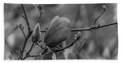 Magnolia Bw Blooms Buds Branches Beach Towel