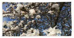 Beach Towel featuring the photograph Magnolia Tree In Blossom by Patricia Hofmeester