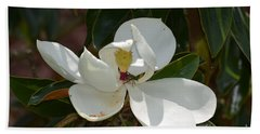 Beach Towel featuring the photograph Magnolia With Beetle by Maria Urso