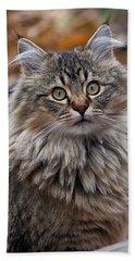 Maine Coon Cat Beach Sheet