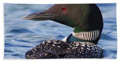 Majestic Common Loon Beach Towel