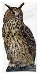 Majestic Eurasian Northern Eagle Owl Bubo Bubo - Hibou Grand-duc - Buho Real - Nationalpark Eifel Beach Sheet