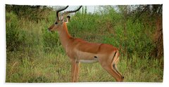 Majestic Impala Beach Towel by Gary Hall
